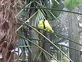 Wild Adventures Bird House 102013 2.JPG