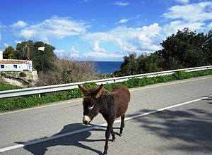 Wild donkeys on Cyprus