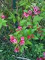 Wildflowers at Alogny - panoramio.jpg