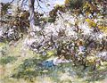 William Stewart MacGeorge. Sloe Blossom.jpg