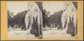 Winter scene, Trenton Falls, from Robert N. Dennis collection of stereoscopic views.png