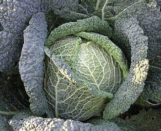 Savoy cabbage - Image: Wirsingkohl