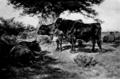 Woman in Art - The Steers.png