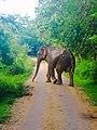 Yaala elephant.jpg