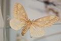 Yellow moth (39837353242).jpg