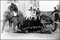 You can even stand on the tusks (a photo from the 1890's or the early 1900's).jpg