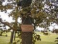 Zaļenieku apkārtne, Raiņa stādītais ozols 2004-09-04 - panoramio.jpg