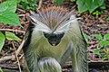 Zanzibar 2012 06 05 4256 (7592167904).jpg
