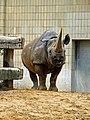 Zoo-nashorn-ffm001.jpg