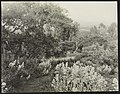 """El Cerritto,"" Edward Larned Ryerson Jr. house, Hot Springs Road, Santa Barbara, California. Valerian along pathway LCCN2013645571.jpg"