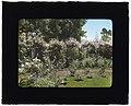 """Senuelo,"" Edward Ditmars Wetmore house, Fairway Road, Montecito, California. Rose arbor LCCN2008679254.jpg"