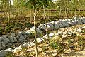 ® S.D. MADRID P.L.M. PARQUE ARGANZUELA-RIO SECO - panoramio (6).jpg