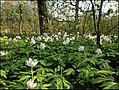 Ботанический сад им. Цицина - panoramio.jpg