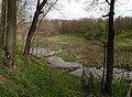 Вид на первую бобровую запруду в истоке реки Воронка.jpg