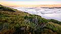 Вище хмар - вид з гори Смотрич.jpg