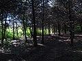 Дендрологічний парк, Довгинцівський район 15.JPG