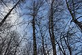 Зимнее небо. Сюктерка. Чебоксарский р-н. Чувашия. Ноябрь 2014 - panoramio.jpg