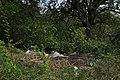 Крутуха Сміття IMG 2464.jpg