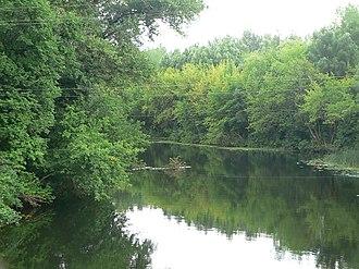 Michurinsky District - Voronesh Forest