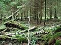 Лес в окрестностях Овиши - panoramio.jpg