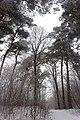 Лісовий заказник Осташки.jpg