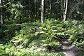 Павловский парк - panoramio (1).jpg