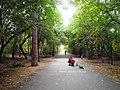 Парк у Центрального стадиона (Челябинск) f006.jpg