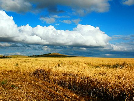 Grain fields near Kokshetau Песня жаворонка(3264-2448).jpg