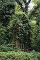 Руины церкви святого Георгия в Белградском лесу, Стамбул - 3.JPG