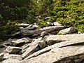 Стежка з кам'яних брил до вершини гори Лисина Космацька.jpg