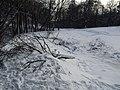 Украина, Киев - Голосеевский лес 88.jpg
