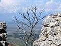 Хорнабуджи. Дерево как бы (А.Мухранов 2011).jpg
