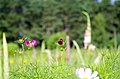 Цветы ботанического сада. - panoramio (5).jpg