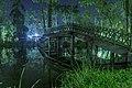 إنعكاس مرايا لجزء من حديقة الأورمان النباتية3.jpg