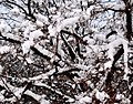 بارش برف بیسابقه 92 مراغه - panoramio.jpg