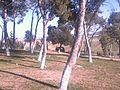 غابة كروس بولاية عين تموشنت.jpg