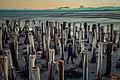 قدم زنی در سکوت دریاچه ارومیه.jpg