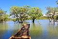 রাতারগুল বাগানের গাছ ও জলাভুমির ছবি 03.jpg