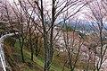 吉野山 上千本の桜 Kamisembon in Yoshinoyama 2014.4.12 - panoramio.jpg
