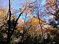 栂尾山高山寺 - panoramio.jpg