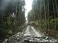 金時山林道 - panoramio (3).jpg