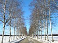 雪並木(Snow avenue) - panoramio.jpg