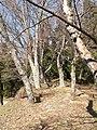 高取城跡(takatorijyou ato) 2010-3-19 - panoramio - ys1979 (11).jpg
