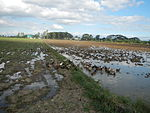 09383jfRoads Paddy fields Domesticated ducks Bahay Pare Center Candaba Pampangafvf 23.JPG