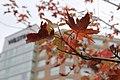 15.DullesCorner.HerndonVA.28October2012 (8131540695).jpg