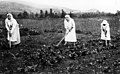 1912 3 עלמות מקבוצת חנה מייזל (קבוצת העלמות בחצר כנרת) בעבודת גן הירק btm11322.jpeg