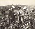1914 H.T. Gussow, W.A. Orton, O. Appple (25410012485).jpg