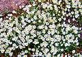 1 4 inch flowers (4809154314).jpg