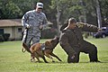 2010 Hawaiian Islands Working Dog Competition DVIDS342910.jpg