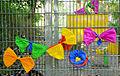 2015-07-03 Grundschule Goetheplatz, Hannover, Schulfest mit Kinderliedermacher Unmada (39).JPG